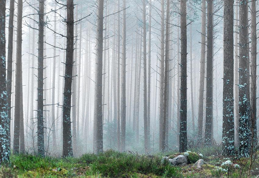 Metsätilan Arvo